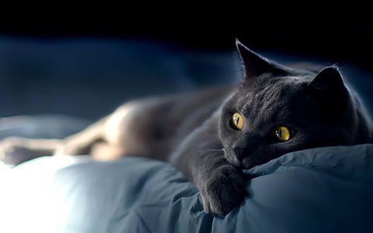 Обои Взгляд кота полный ужаса