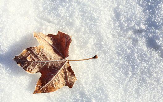 Обои Пожелтевший листок лежит на снегу