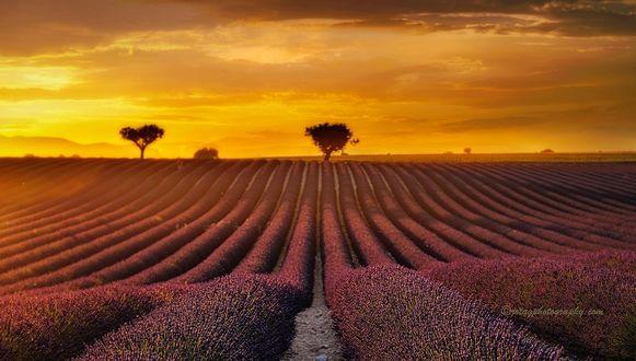 Обои Закат на лавандовом поле, фотограф Joaquin Guerola