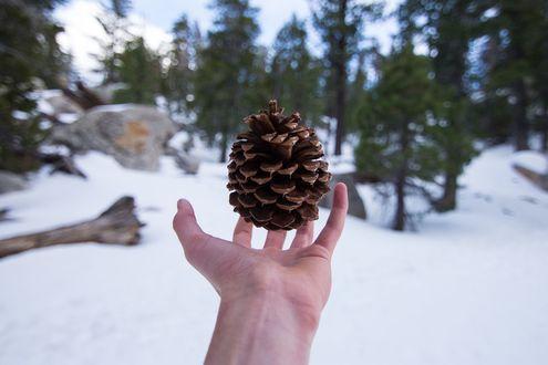 Обои Над рукой человека шишка на фоне зимнего пейзажа, фотограф Ian Brown