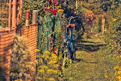 Обои Велосипед стоит у забора с цветами, by Lenna-Primrose