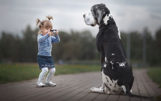 Обои Девочка фотографирует немецкого дога, фотограф Андрей Селиверстов