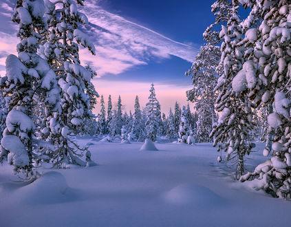 Обои Деревья в снегу под облачным небом, фотограф Oleg_O