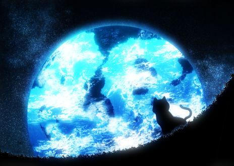 Обои Черный котенок сидит в траве на фоне ночного неба и огромной луны, by ウララ