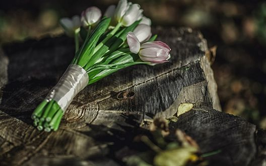 Обои Букет тюльпанов и два колечка на пеньке