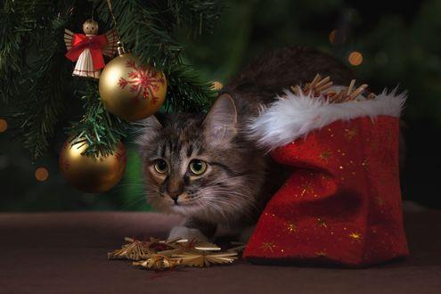 Обои Кот под елкой с игрушками
