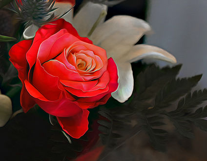 Обои Красная роза и белая лилия