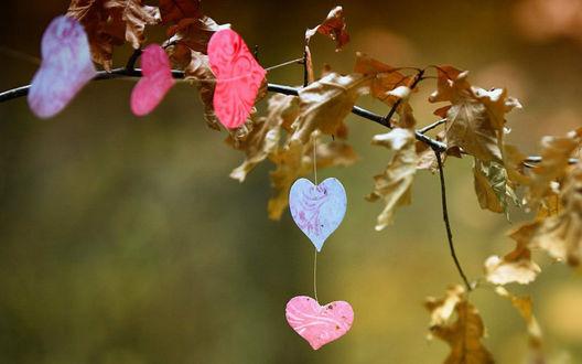 Обои Осенняя ветка с сердечками на ниточке