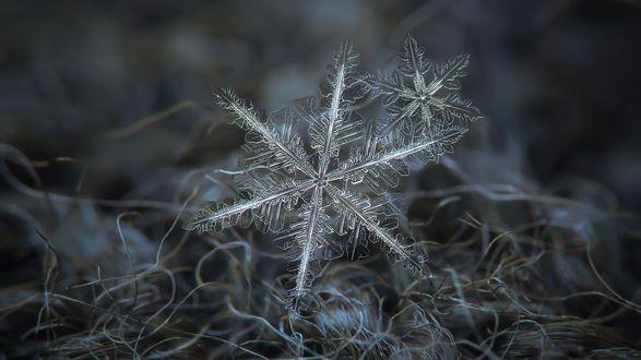 Обои Снежинки крупным планом, фотограф Alexey Kljatov