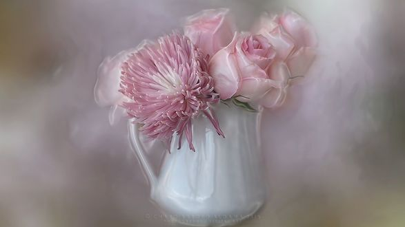 Обои Розовые розы и астра в кувшине. фотограф Charo Arroyo