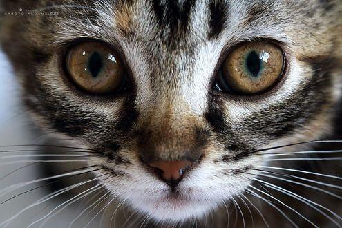 Обои Мордочка кота крупным планом, фотограф Charo Arroyo