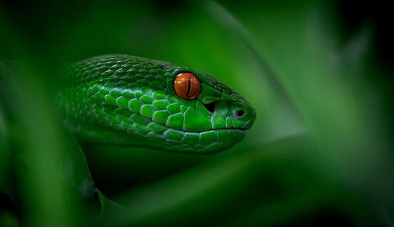 Обои Зеленая змея, фотограф mgelric