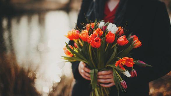 Обои В руках человека букет тюльпанов