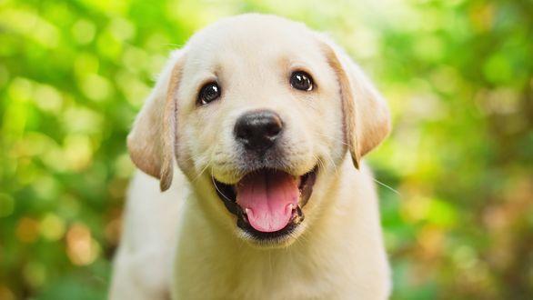 Обои Счастливый щенок на размытом фоне
