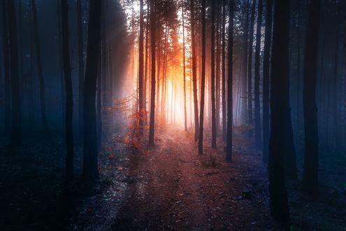 Обои Лес в солнечных лучах, фотограф Adnan Bubalo