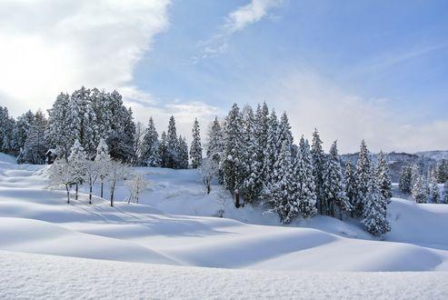 Обои Ели на холмах покрытых снегом