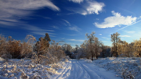 Обои Зимняя дорога ведущая в лес