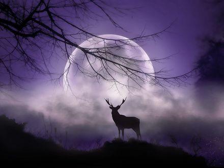 Обои Олень стоит на фоне полной луны, фотограф Jenny Woodward