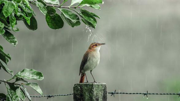 Обои Птичка принимает душ