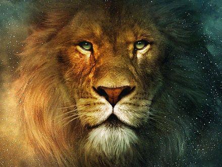 Обои Морда льва крупным планом, Хроники Нарнии