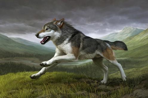 Обои Бегущий волк, by Atenebris