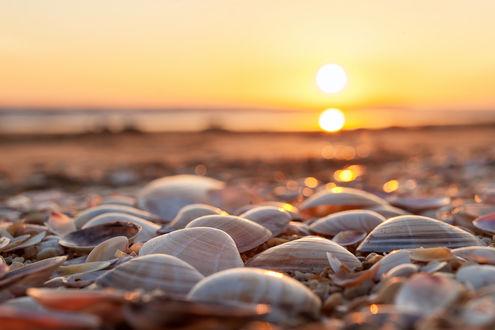 Обои Ракушки на берегу на фоне солнца, фотограф Manfred Oberhauser