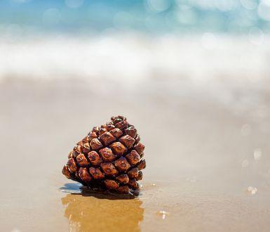 Обои Шишка лежит на песке