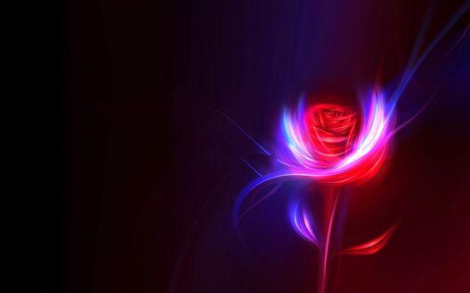 Обои Красная роза на темном фоне