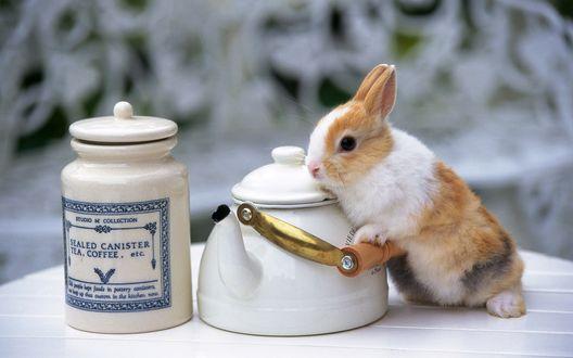 Обои Гостеприимный кролик стоит возле чайника и баночки с кофе