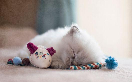 Обои Котенок спит рядом с игрушкой-мышкой