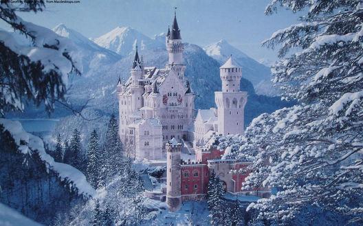 Обои Замок Нойшвайнштайн зимой среди заснеженных елок в горах
