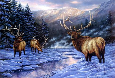 Обои Олени возле реки зимой на фоне гор и елок