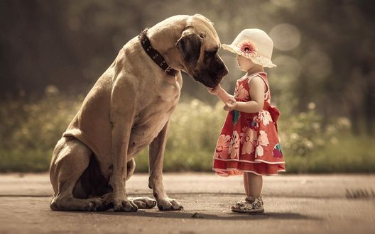 Обои Маленькая девочка трогает рукой немецкого дога, фотограф Андрей Селиверстов