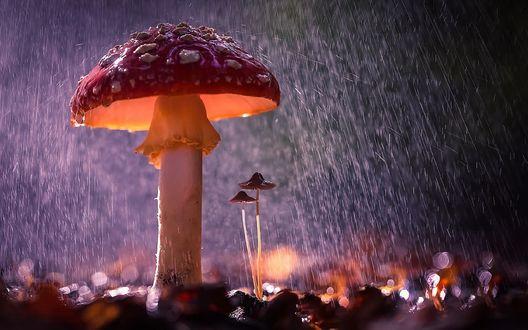 Обои Грибы под дождем, фотограф Вячеслав Мищенко