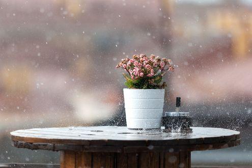 Обои Гошок с цветами на деревяном столе под дождем
