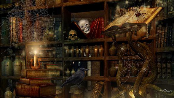 Обои Тайник алхимика с черепами, книгами, паутиной и пауками