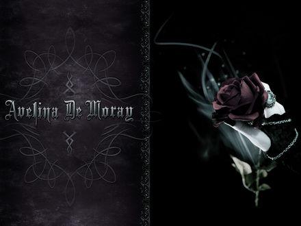 Обои Роза в руке (Avelina De Morag)