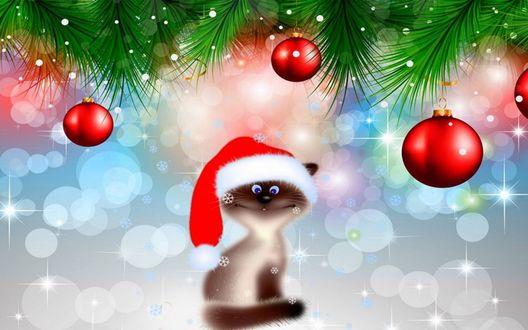 Обои Кот в новогодней шапочке под украшенными новогодними шарами и ветками ели