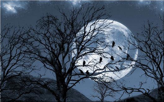 Обои Вороны на деревьях на фоне полной Луны