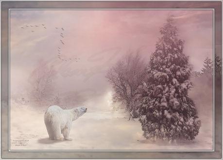 Обои Белый медведь у заснеженной елки и птицы в небе