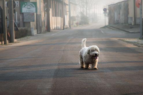 Обои Пес на улице города