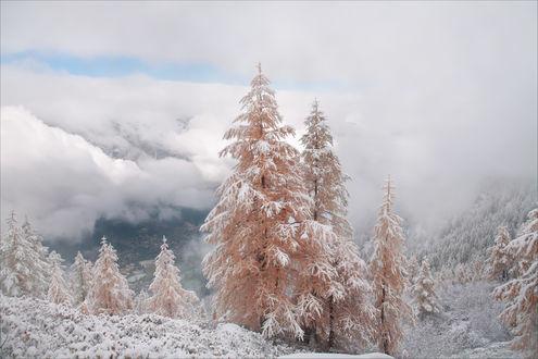 Обои Деревья в снегу на фоне густых облаков, фотограф Михалюк Сергей