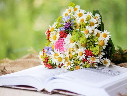 Обои Букет ромашек и других цветов лежит на открытой книге, фотограф Valeriya Virskaya