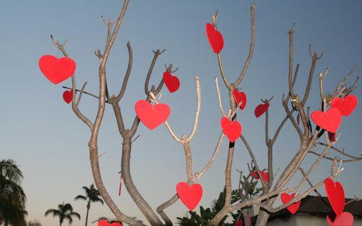 Обои Красные сердечки висят на ветках дерева