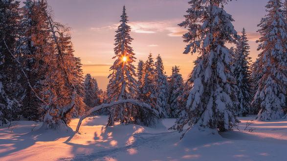 солнечная зима в лесу без смс