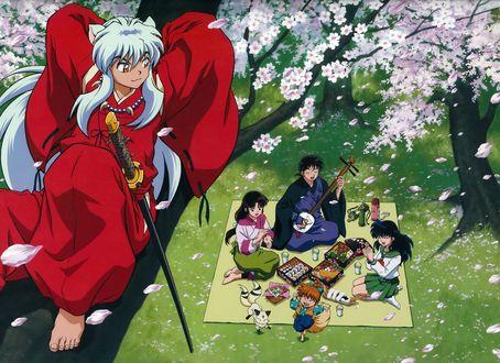 Обои Инуяша / InuYasha сидит на цветушей сакуре, рядом с которой друзья устроили пикник, из аниме InuYasha / Пес демон-хранитель