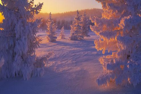 Обои Работа Очарование холода, фотограф Владимир Рябков