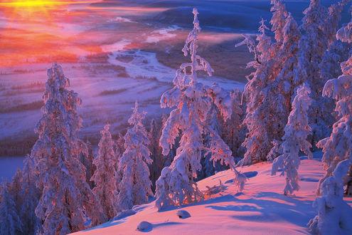 Обои Солнце освещает склон с деревьями, фотограф Владимир Рябков