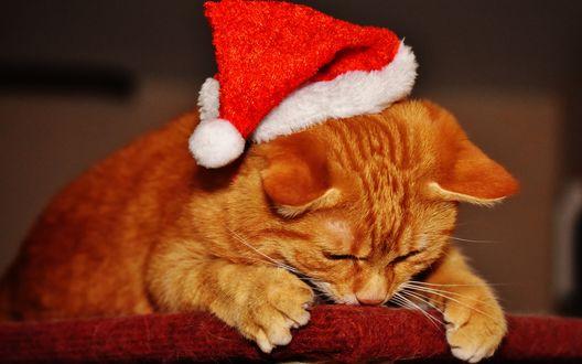 Обои Рыжий кот в новогодней шапочке