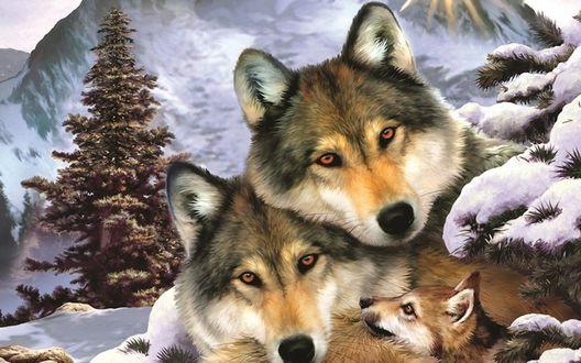 Обои Волчья семья на фоне зимнего пейзажа